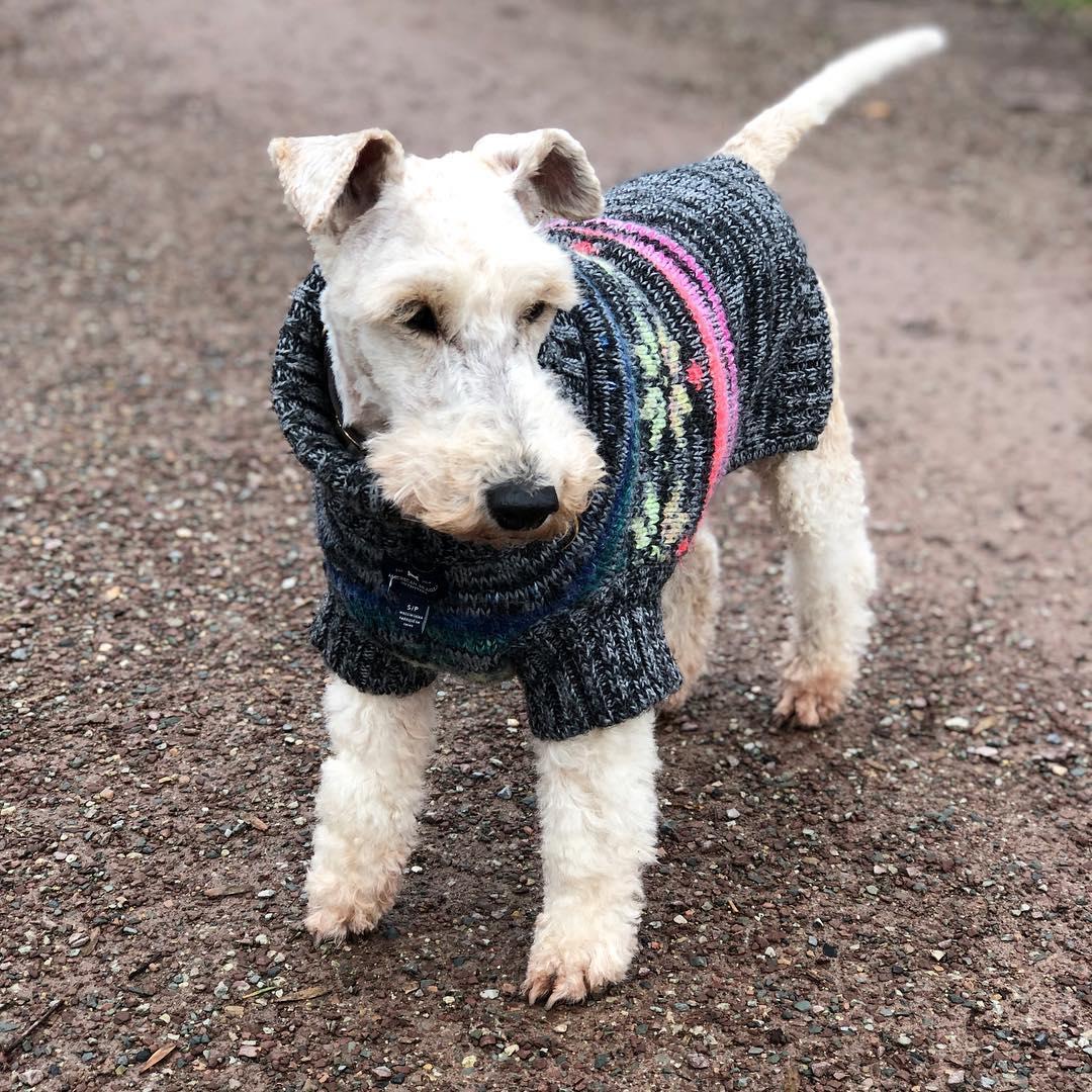 Bruni war heute beim #frisör . Jetzt sieht sie wieder #hübsch aus, friert aber 😬 #sorry #foxterrier #foxterrierwire #wiredfoxterrier #dogswithbeards #dog #familydog  #cuteanimals #dogsofinstagram