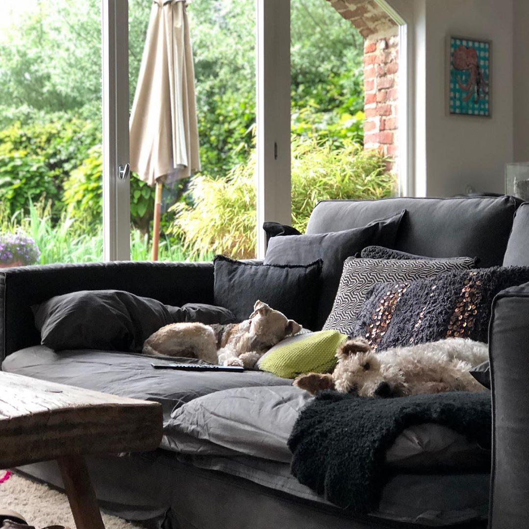 Immer nur schlafen 🐶🐶 #foxi #foxterrier #bruni #pepi #familydog #foxterrierlovers #foxterrierwire #lazy #myview #interiorinspo #interiordesign #interior4inspo #couch #couchstyle
