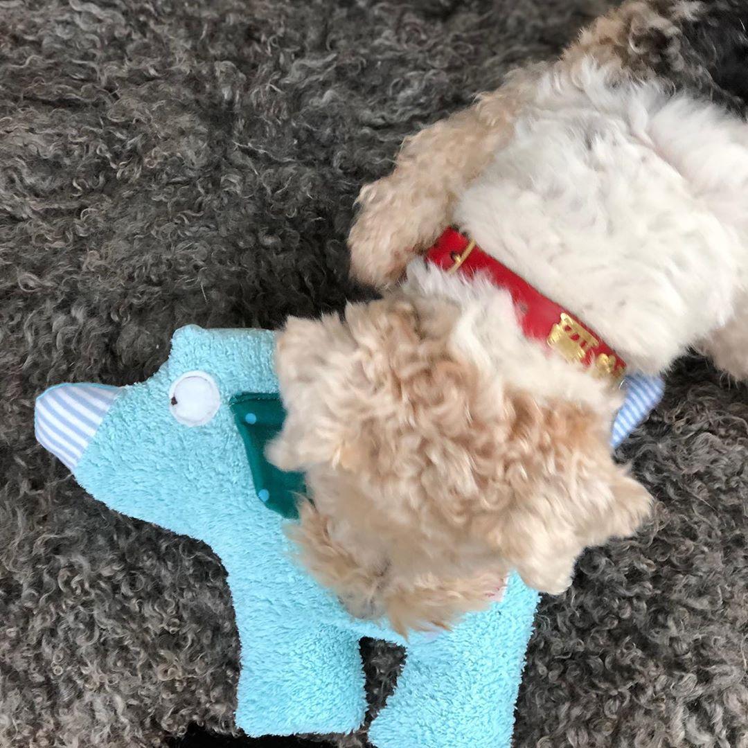…. na, welcher Wuffi interessiert sich denn da für den Stofftierhund ? Bruni hat sofort erkannt, dass das ein Kollege ist . #herzenstreu #handmadewithlove #softtoys #foxi #foxterrierwire #kuscheltier #kidsroomdesign #kidsroomdeco #babytoys #newborn #cutestuff #kidsstuff #slowcraft