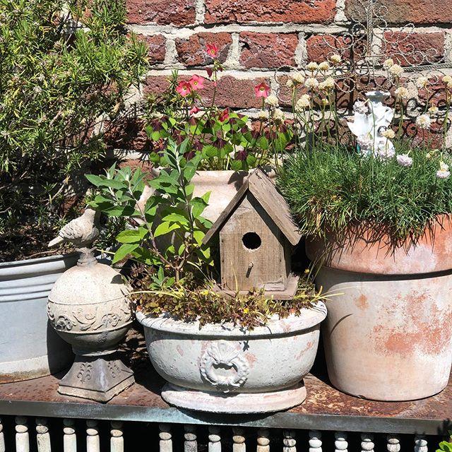 #gardeninspiration #garden #gardenlove #gardening #gardenflowers #romanticgarden #herzenstreu #glücksbringer #klee #shabbychic #shabbygarden #vintagegarden